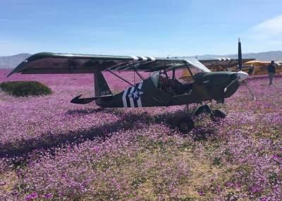 Denuncian que once avionetas aterrizaron en pleno desierto florido en Atacama