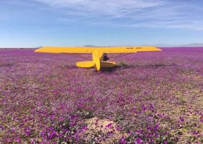 Indignación causa aterrizaje y posterior picnic de once avionetas sobre desierto florido
